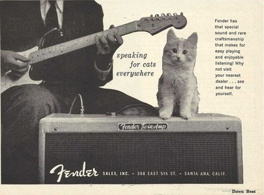 Fender: speaking for cats everywhere